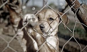 abandono animales