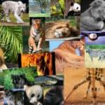 curiosidades e información de animales