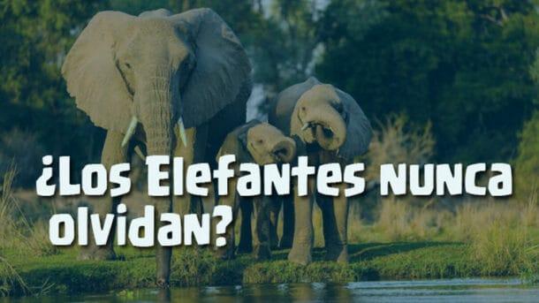 los elefantes es verdad que nunca olvidan